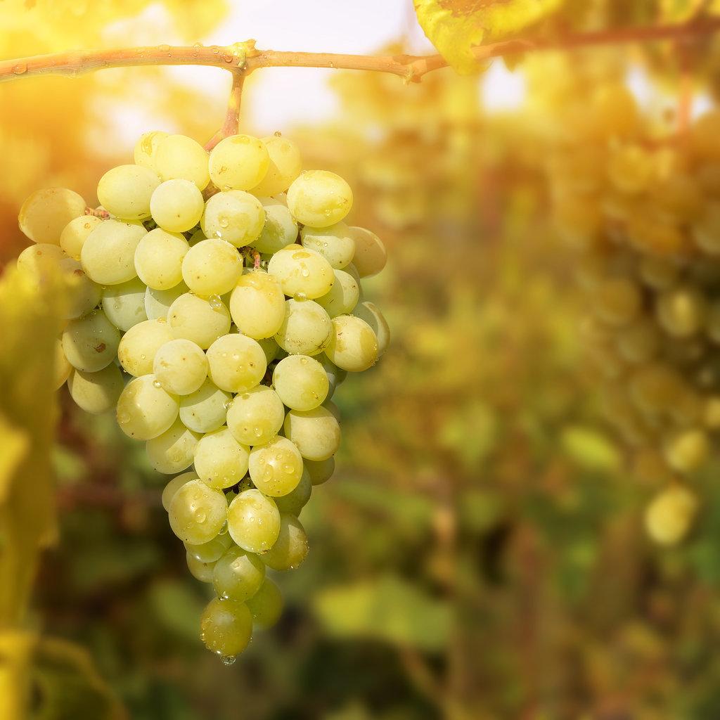 Домашні рецепти краси. Зелений виноград